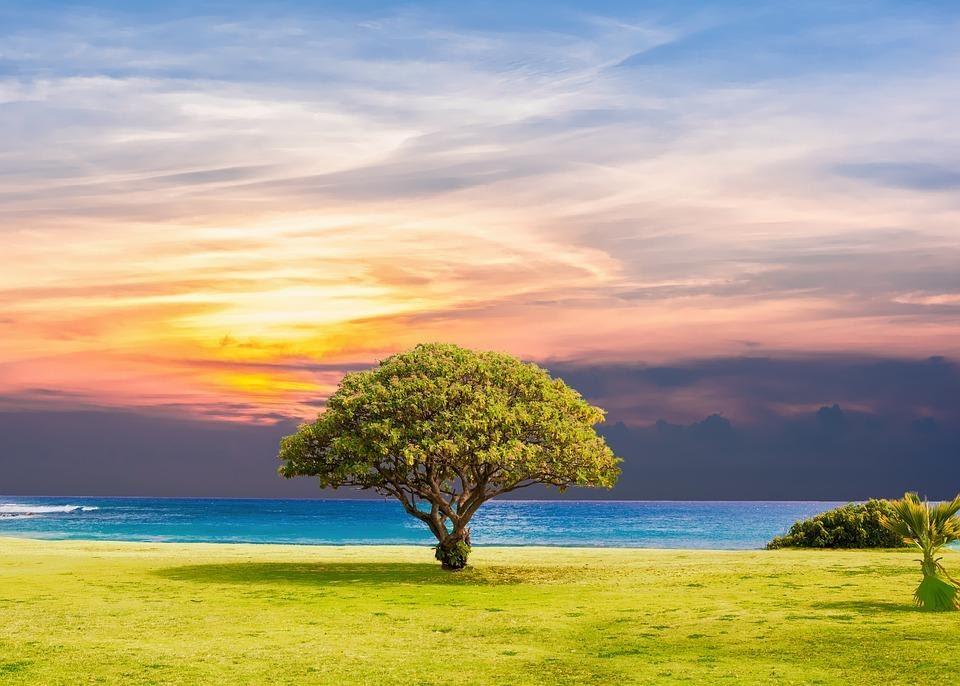 drzewo na łace